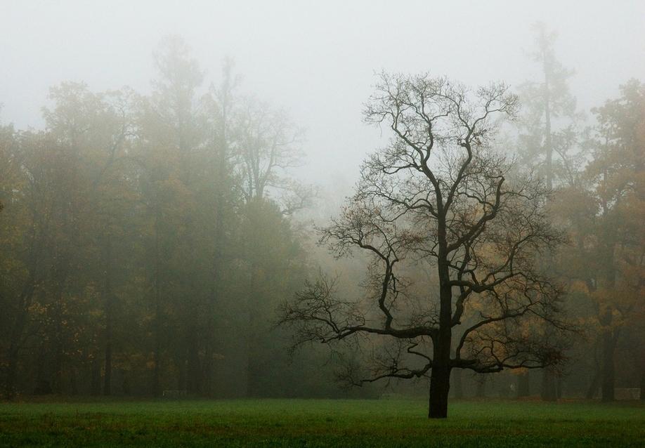 http://s1.hostingkartinok.com/uploads/images/2012/01/758381ffc6105cca0d188eab32cee3a5.jpg