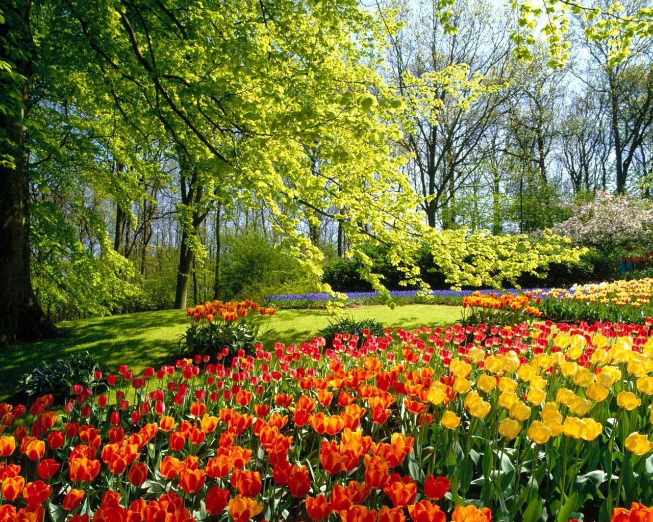 http://s1.hostingkartinok.com/uploads/images/2012/03/530b4a89f32681549dbe686feca96b32.jpg