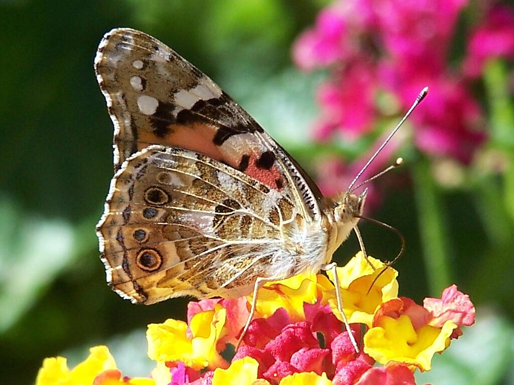 http://s1.hostingkartinok.com/uploads/images/2012/03/5d89f896718de39666472c99c288879b.jpg