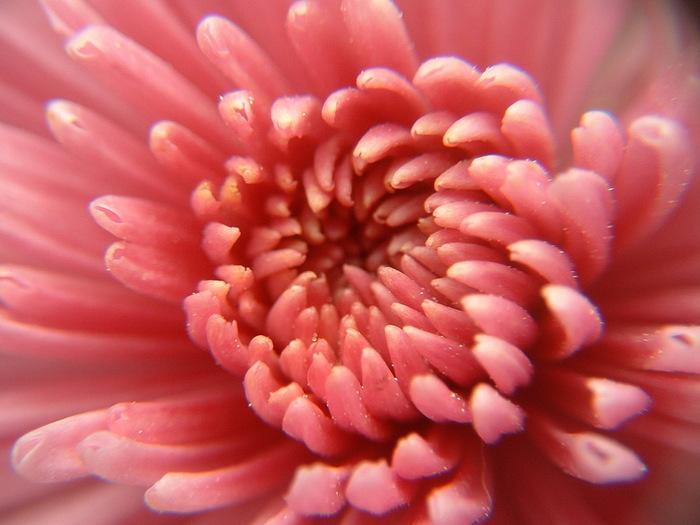 http://s1.hostingkartinok.com/uploads/images/2012/03/797389893fcb09ee0d1393bb79a4f74e.jpg