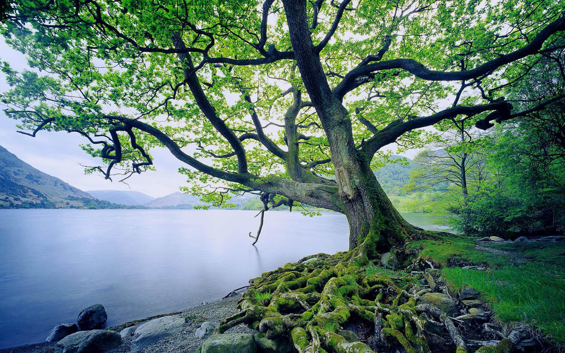 накренившееся над речкой дерево  № 1217022  скачать