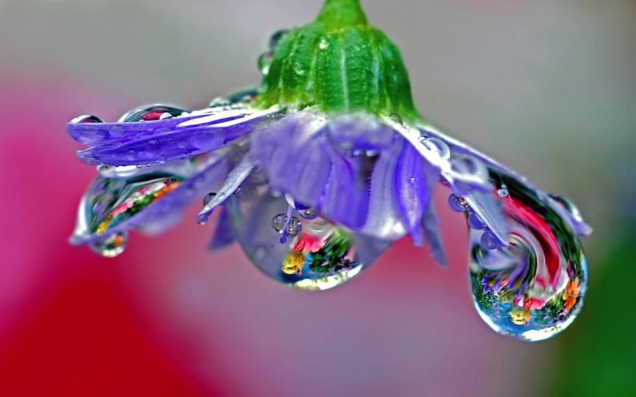 http://s1.hostingkartinok.com/uploads/images/2012/04/278643ad477a6b63f690083673554617.jpg
