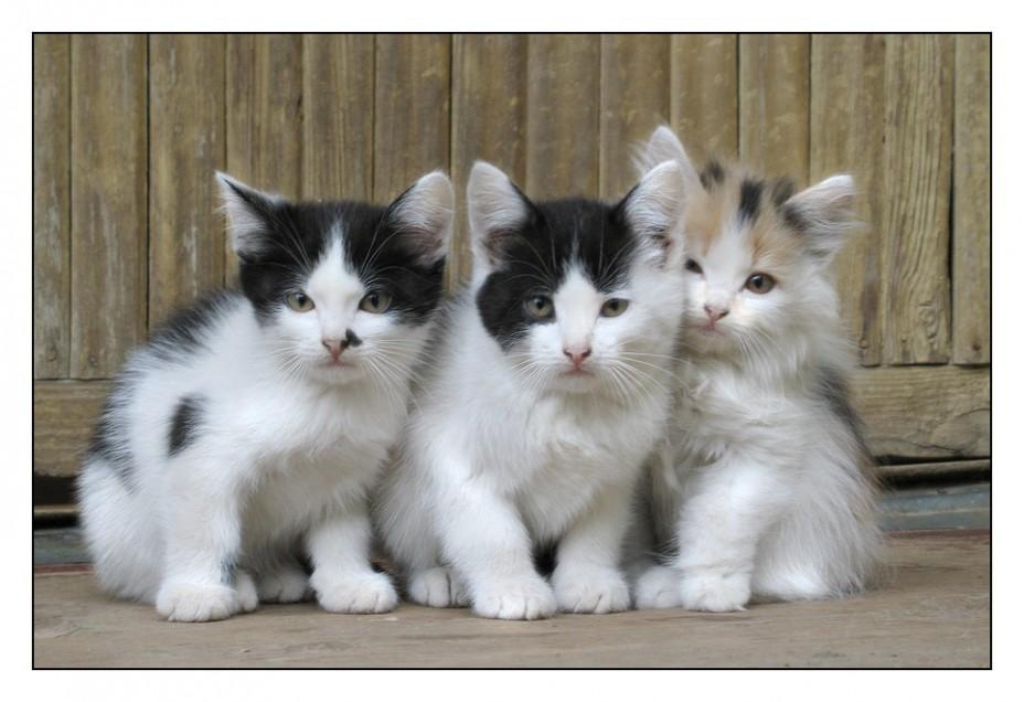 http://s1.hostingkartinok.com/uploads/images/2012/04/34ebf513c756f62474930c9e2f94eec1.jpg