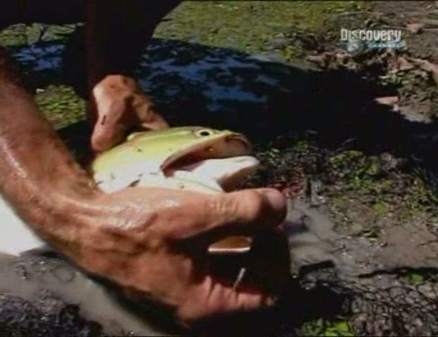 бесплатное смотреть видео о рыбалке: