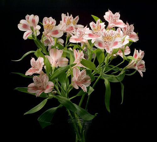 Девушки скоро 8 марта. Какие ваши любимые цветы? / пионы цветы