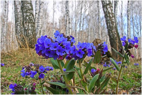 Фотоподборка лесных фотографий