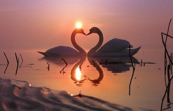 http://s1.hostingkartinok.com/uploads/images/2012/05/e847a560b432428522451a8ac3dabf3b.jpg