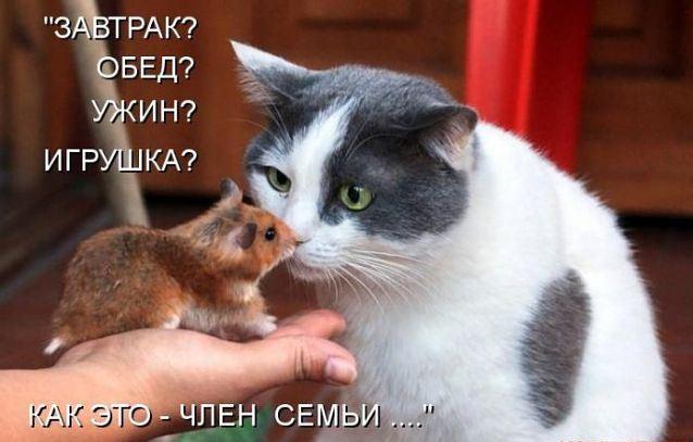 http://s1.hostingkartinok.com/uploads/images/2012/10/13f433956b605178a2836c4e8c2836dc.jpg
