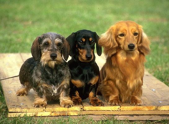 Рулетки и ошейники для собак – делаем правильный выбор