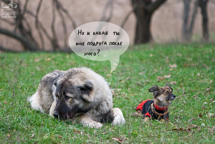 http://s1.hostingkartinok.com/uploads/images/2012/12/d84c77191d7818ab041d18dde75fc446.jpg