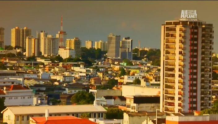Animal Planet: Неизведанные города / Worlds wildes city (1-7 серии) (2014) SATRip