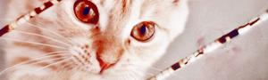 http://s1.hostingkartinok.com/uploads/images/2014/07/5856638e6afd8cb5f72c28b724100590.jpg