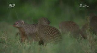 Animal Planet: ���������� �������� ������� ���� / The Secret Creatnres of Jao [1-7 ����� �� 7] (2009) HDTVRip