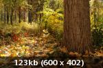 Осенний фотоконкурс Ae081a8cca46132c5e275a3016e6f998