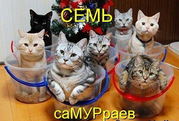 http://s1.hostingkartinok.com/uploads/images/2012/10/123200b69e153b0397b6a8a0106011f6.jpg