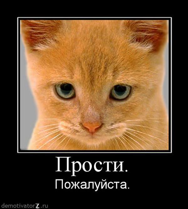 Картинки прости меня котик, для медицинской сестры